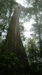 powerful trees