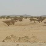 begroeiing in de Bayada woestijn