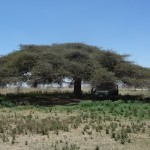 Picknick_near_entrance_Serengeti