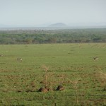 Serengeti overview