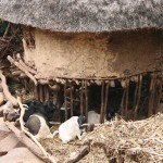 livestock under the house at Konso tribe