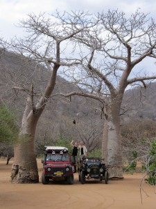 baobab met auto's