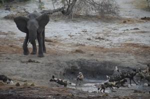 elephantdogs01