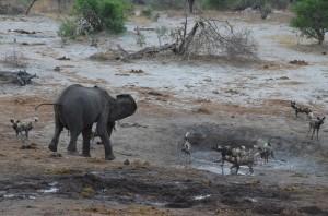 elephantdogs02