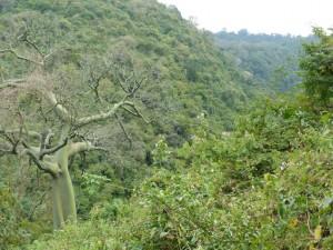 endless rainforest
