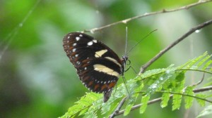 one of the hundreds butterflies