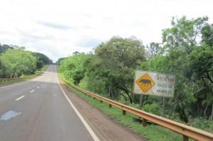 Tapir sign