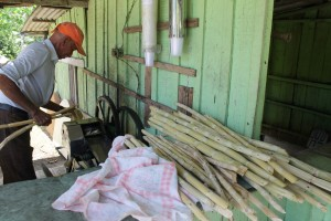 Pressing the sugar cane
