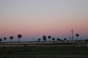 13 Palmtrees in Uruguay