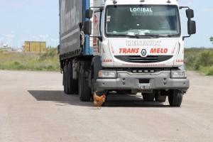 Chicken at gasstation1