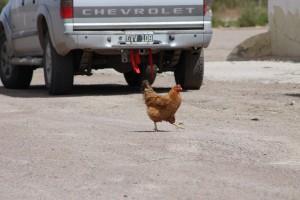 Chicken at gasstation2