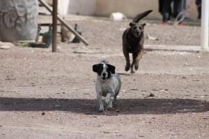 Dogs at gasstation